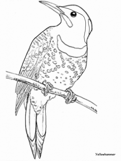 yellowhammer bird coloring pages - photo #6