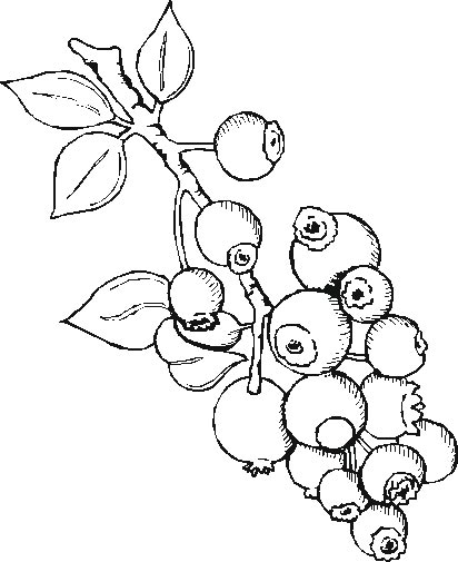 Durian Printable Coloring Pages title=