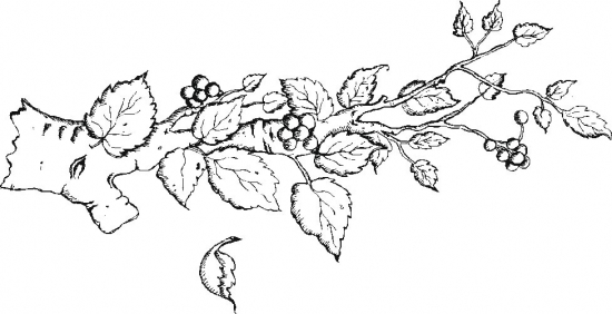 Tree Branches Coloring Page